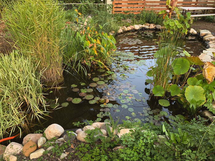 Pond Maintenance - Fall Clean-Up and Winter Prep