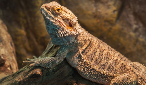 Lizards 101: Creating the Perfect Habitat for Your New Scaly Friend