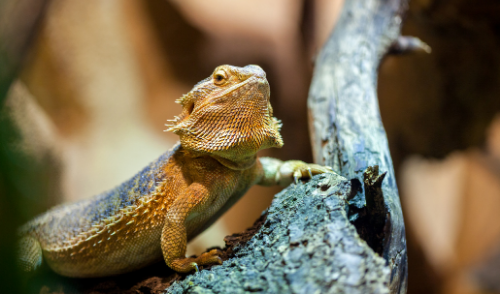 The Best Reptiles for Kids and Beginners