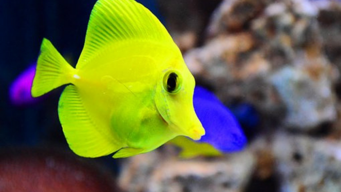 How to Avoid Unwanted Fish Breeding in Your Tank
