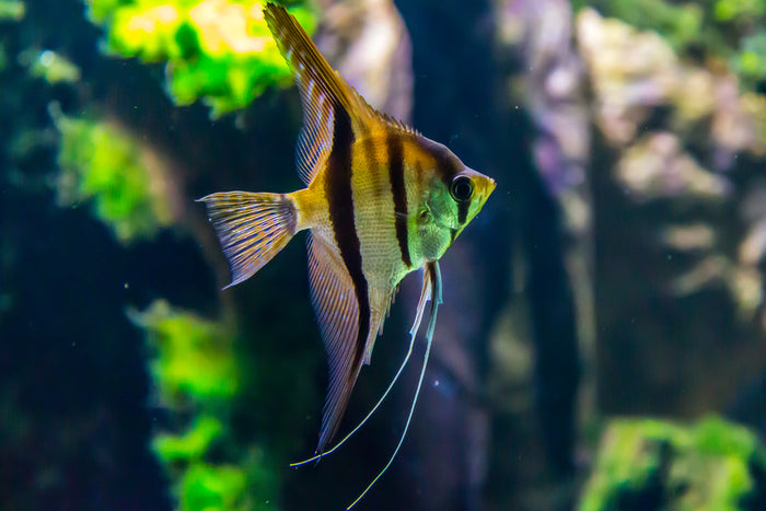 Solutions to Common Water Quality Concerns in Aquariums