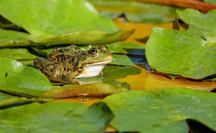 Focus on Frogs: Everything You Need to Know About Caring for Pet Amphibians