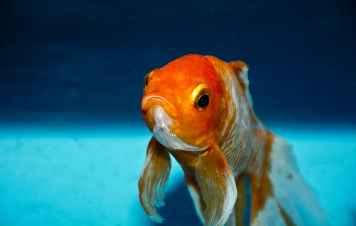 Stay Comfortable with These 4 Tips for Maintaining Aquarium Temperatures