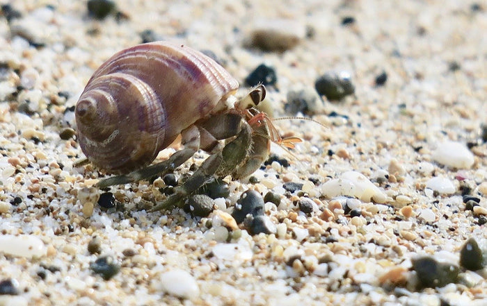 The Ultimate Hermit Crab Care Guide for Curious Crustaceans