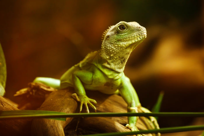 Understanding When to Change Your Reptile Bulbs