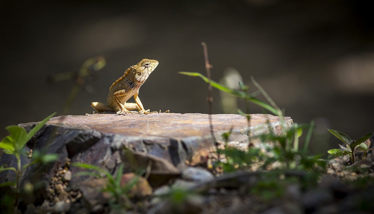 The Cheat Sheet for the Perfect Reptile Habitat