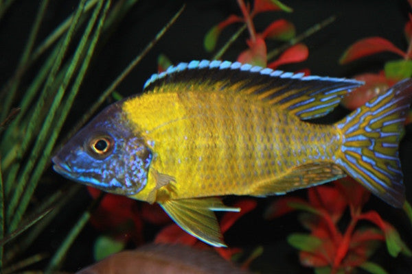 The Importance of a Varied Diet for Freshwater Fish (Part 1)