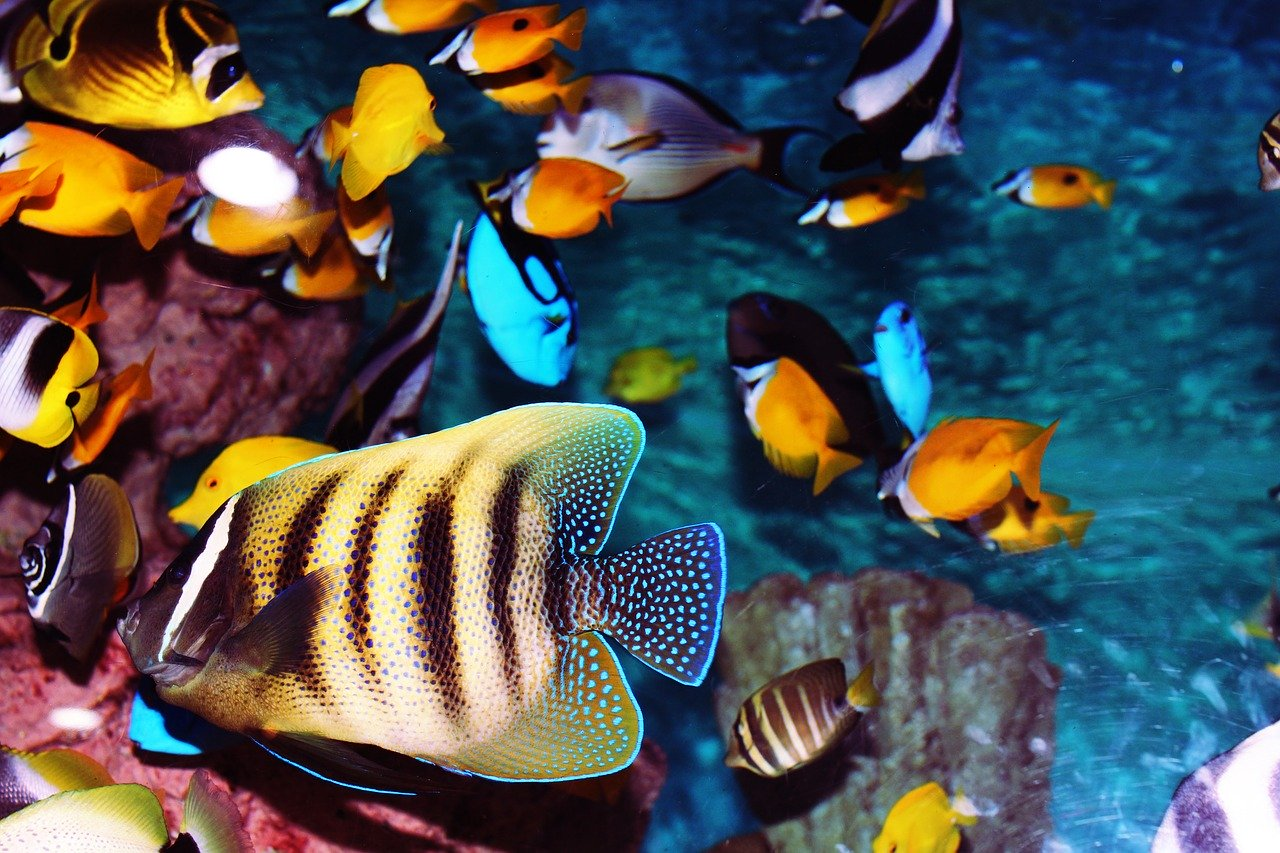 Finding Nemo: Tips for Keeping Your Tank Clean, Clear, and Happy