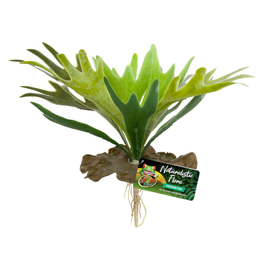 097612180657 BU-65 zoo med staghorn fern naturalistic flora zoomed