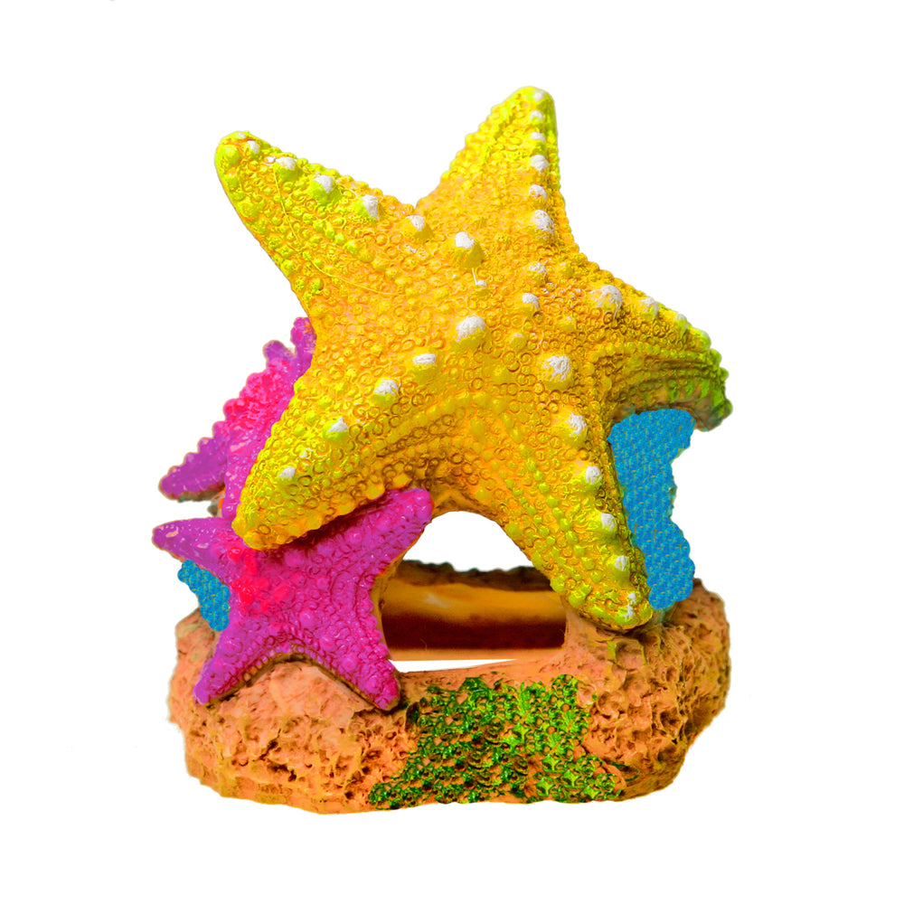 030157019563 Blue Ribbon Pet Products EE-1908 Sea Star Duo SeaStar