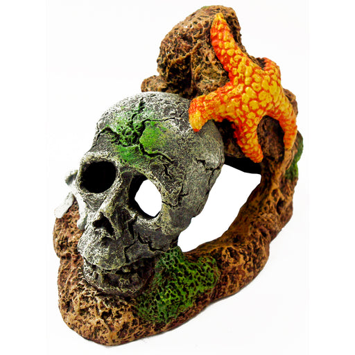 030157002879 Exotic Environments Skull With Starfish Ornament EE-366 Blue Ribbon Pet Products Aquarium decorations
