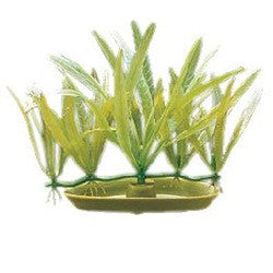 Marina AquaScaper Foreground Plant, Pygmy Chain Sword 3 Inch PP318 PP-318 080605103184