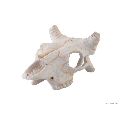 Exo Terra Buffalo Skull Hideout Small Reptile Decoration Ornament terrarium