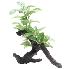 Fluval Plant African Shade Leaf 8in