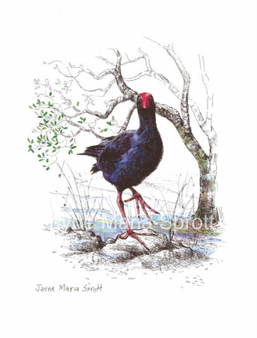An original hand painted NZ Native Bird Pukeko