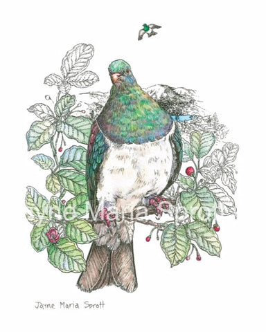 An original hand painted NZ Native Bird Kereru (Woodpigeon)