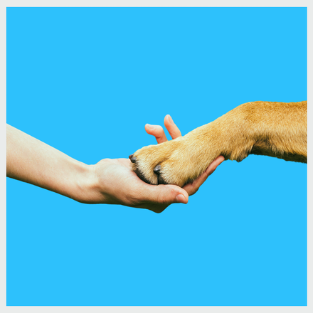 wowdogbox promise for high quality pet supplies- dog food in india