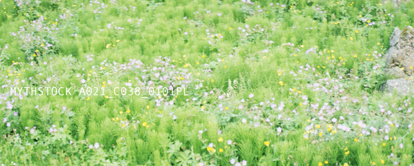 Wildflowers in a meadow, left to right pan
