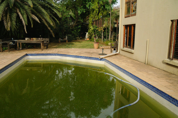 Having Pool Algae Problems?