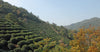 Chinese Tea Regions: Zhejiang