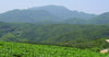 Chinese Tea Regions: Fujian