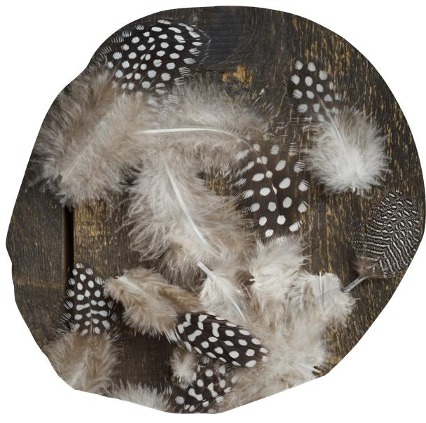 Feathers of guinea fowl