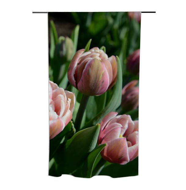 Tulips Curtain