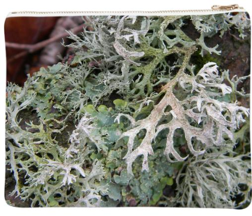Hairy Lichen Clutch