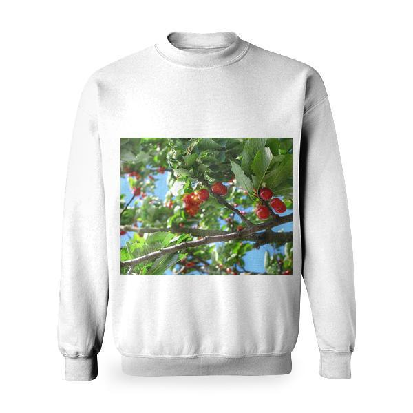 Red Cherry Fruit On Brown Tree Branch Basic Sweatshirt