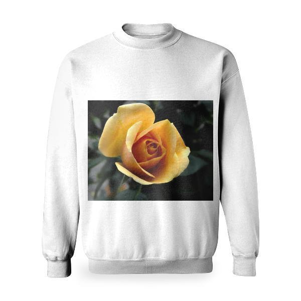 Yellow Rose Close Up Photography Basic Sweatshirt