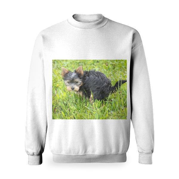 Yorkshire Terrier Puppy On Green Grass Field Basic Sweatshirt