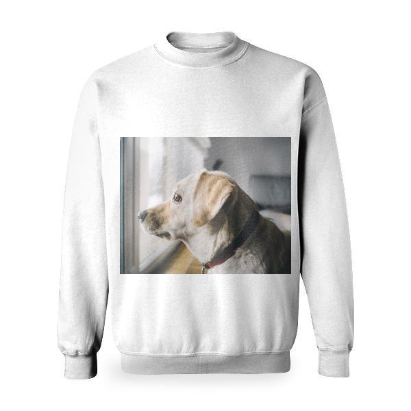 Yellow Labrador Retriever Facing Window In Room Basic Sweatshirt