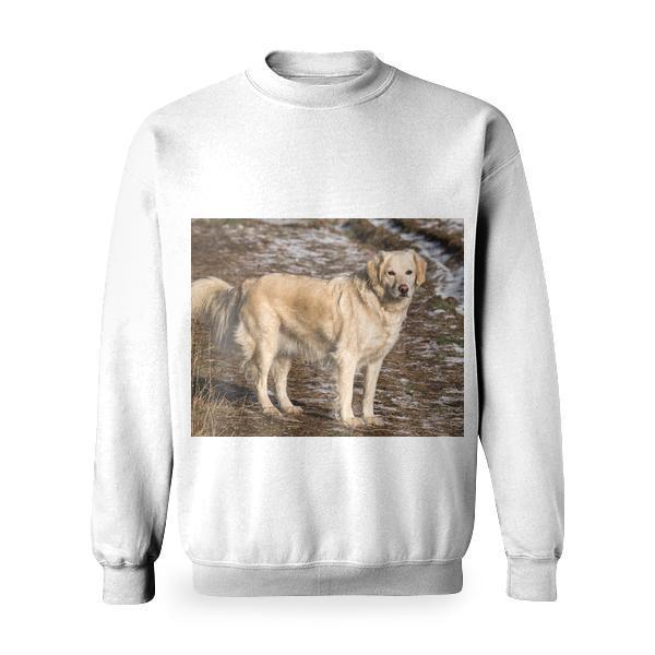 Yellow Labrador Retriever On Green And Brown Grassy Road Basic Sweatshirt