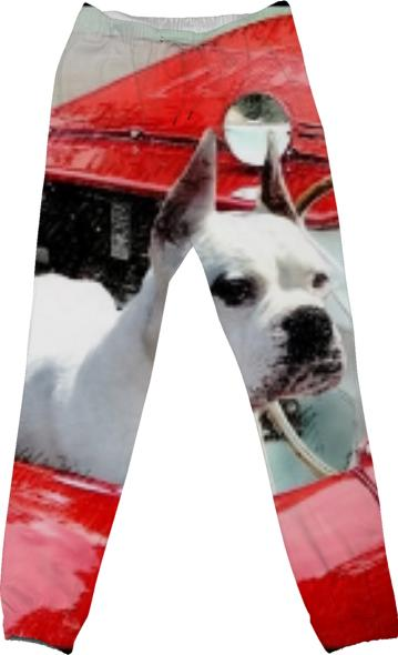 White Boxer Dog in sportscar cotton pants