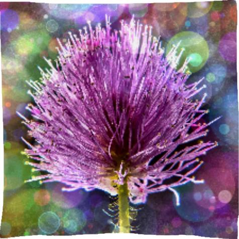 Beautiful Purple Flower Floral Design Bokeh Circles Fantasy Flairs Graffiti Altered Art Photo