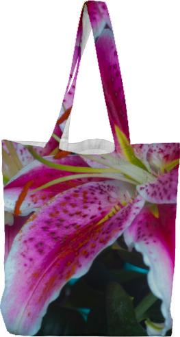 Stargazer Lilies Pink Magenta Magic