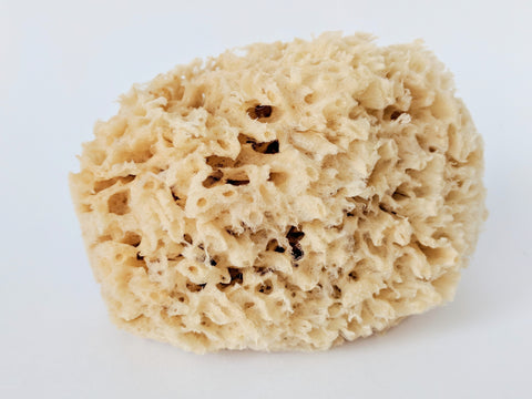 Premium Sea Wool Sponge Form