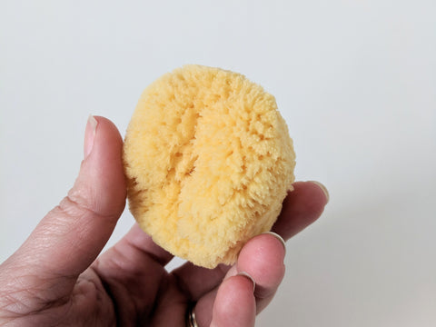 Caribbean Sea Silk Sponge