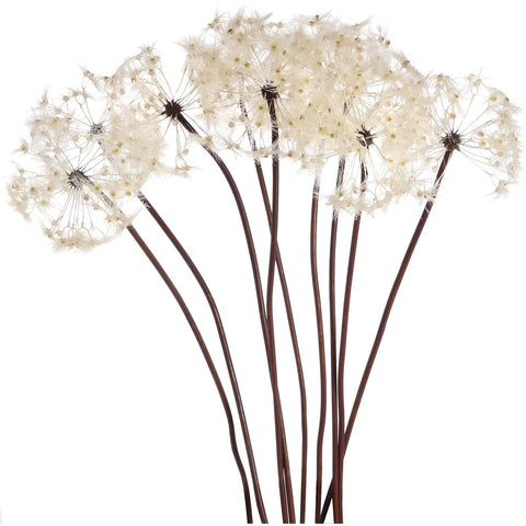 Large Single Dandelion Stem 110cms-Accessories-Retail Therapy Interiors