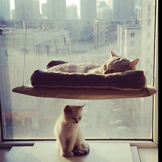 Hanging Bed and Window Perch For Cats