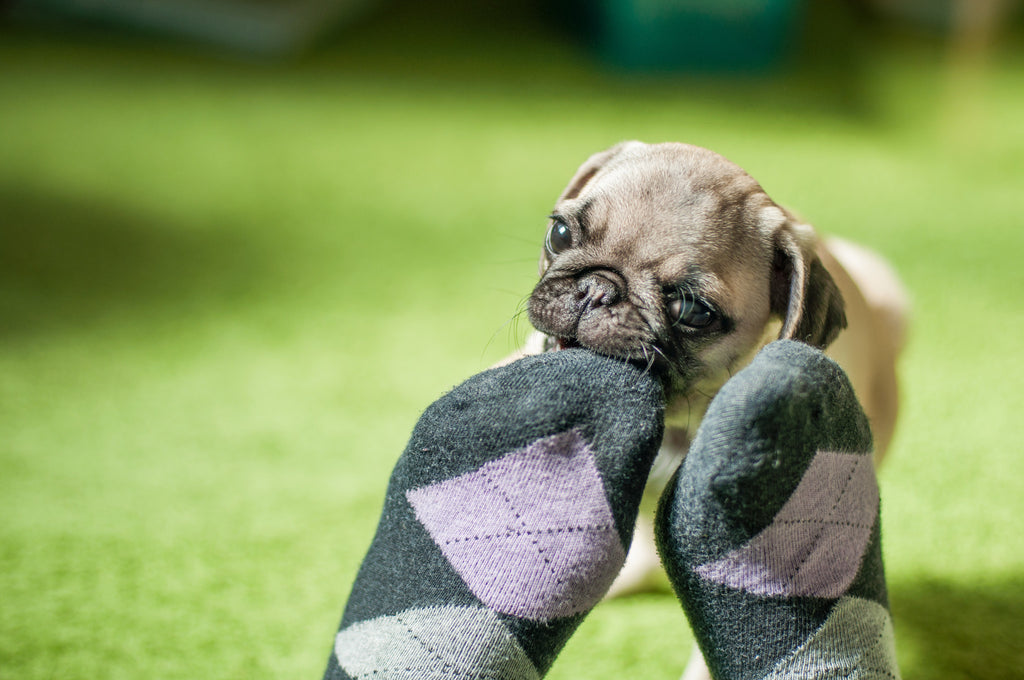 15 Signs You're The Best Pug Mom
