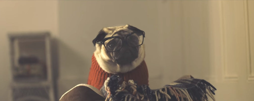 13 Pug Commercials You'll Love