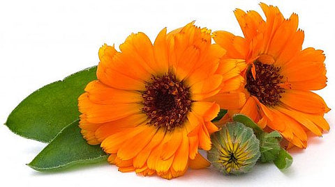 calendula-coconut-oil- for-sunburn