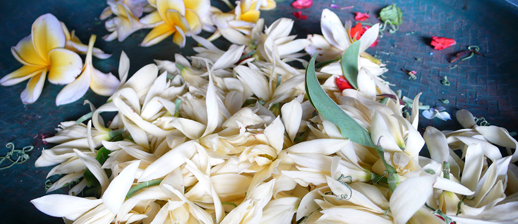 Jasmine is The Fragrance Obsession Of Almost Every Woman