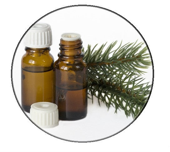 Black spruce essential Oil - Organic - Pacific Scents