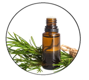 Rosemary essential oil - Organic - Pacific Scents