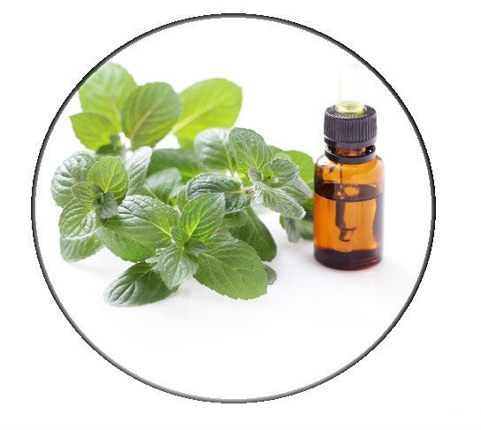 SpearMint essential oil - Organic - Pacific Scents