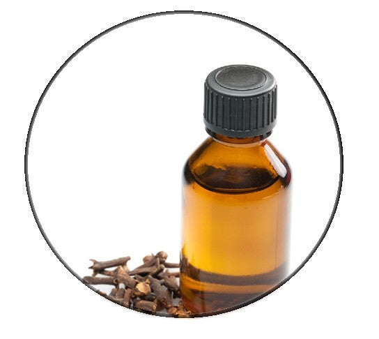 Clove essential oil - Organic - Pacific Scents