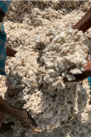 Organic Farming & Fibres ~ Our Cotton Process