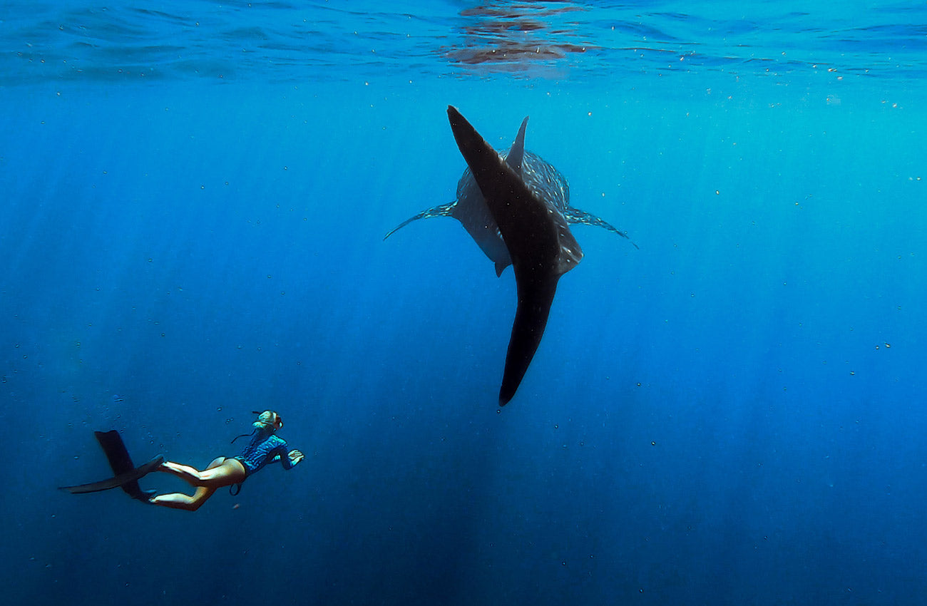 Arnhem x Sea Shepherd Camapig Supporter swimming with whale sharks on the Ningaloo Reef in WA